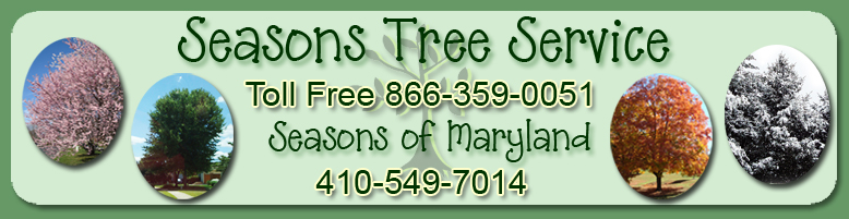 Seasons Tree Service / Seasons of Maryland